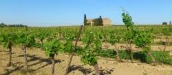 Le vignoble de la Gourgasse