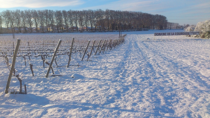 Parcelle de vigne et canal du midi sous la neige